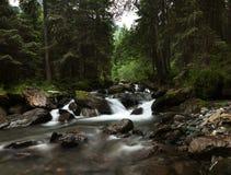Bergflod i skogen Arkivfoton