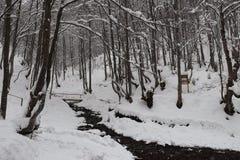 Bergflod i skogen arkivbilder