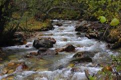 Bergflod i skogen i höst Royaltyfri Fotografi
