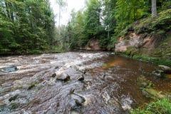 Bergflod i sommar som omges av skogen Arkivfoto