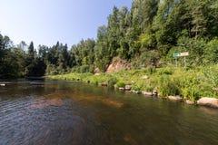 Bergflod i sommar som omges av skogen Royaltyfri Foto