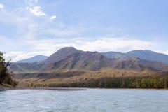 Bergflod Katun i sommar, Altai, Ryssland Arkivbild