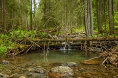 Bergflod med en liten kaskad i pinjeskog royaltyfri bild