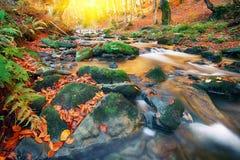 Bergflod med forsar och vattenfall på hösttid Royaltyfria Bilder