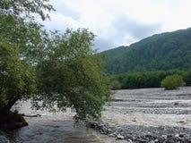 bergflod och skog Royaltyfri Bild