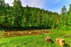 Bergflod och trä royaltyfri foto