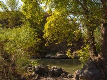 Bergflod som inramas av gröna växter Royaltyfri Bild