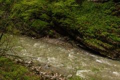 Bergflod som omges av grön vegetation Arkivfoto