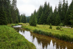 Bergflod till och med skog Arkivbilder