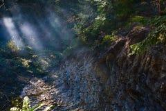 Bergfloden, dimma och vaggar av Carpathian berg i Ukraina Royaltyfri Bild