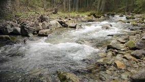 Bergfloden med vaggar och mossa stock video