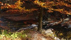 Bergfloden med vattenfallet i höstskog på den fantastiska soliga dagen arkivfoton