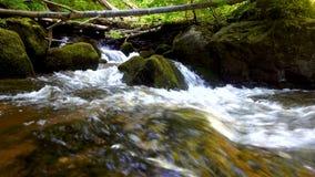 Bergfloden - strömma att flöda till och med den tjocka gröna skogen, Bistriski Vintgar, Slovenien stock video