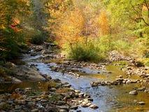 Bergflodliten vik och skog i nedgång med reflexioner Royaltyfria Bilder
