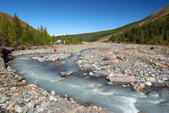 bergflodträn Arkivfoton