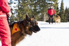 Bergfrälsare med hans hund Royaltyfri Foto