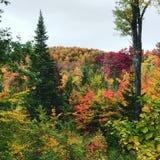 Berggebladerte in Vermont royalty-vrije stock foto