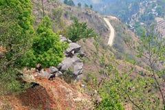 Berggeiten die zich op een klip bevinden Royalty-vrije Stock Foto's
