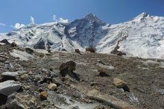 Bergglaciärstenar Arkivbild