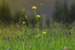 Berggräs och blommor i bergen Arkivfoton