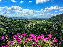 Berggrönska med rosa blommor Royaltyfri Fotografi