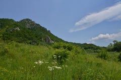 Berghänge und Sommerblumen Lizenzfreies Stockfoto