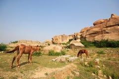 Berghästar i historiskt ställe Arkivbild