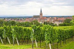 Bergheim (阿尔萨斯) -有葡萄园的全景 库存照片