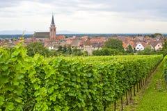 Bergheim (阿尔萨斯) -有葡萄园的全景 免版税图库摄影