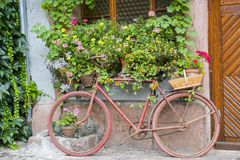 Bergheim (Alsace) - Bicycle and flowers Stock Photos