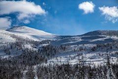 Berghelling en de winterbos in zonnig weer stock foto