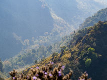 Berghelling en rand van de berg van Doiluang Chiangdao Stock Foto's
