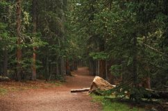 Berghelling wandelingssleep die uit het bos leiden royalty-vrije stock fotografie