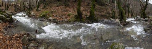 Bergig snabb flod för panoramautsikt med klart vatten i skogen i bergen Dirfys på ön av Evia, Grekland fotografering för bildbyråer