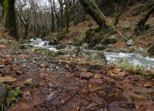 Bergig snabb flod med klart vatten i skogen i bergen Dirfys på ön av Evia, Grekland fotografering för bildbyråer