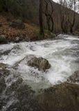 Bergig snabb flod med klart vatten i skogen i bergen Dirfys på ön av Evia, Grekland arkivfoton