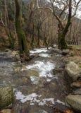Bergig snabb flod med klart vatten i skogen i bergen Dirfys på ön av Evia, Grekland royaltyfria bilder