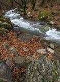Bergig snabb flod med klart vatten i skogen i bergen Dirfys på ön av Evia, Grekland royaltyfri bild