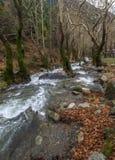 Bergig snabb flod med klart vatten i skogen i bergen Dirfys på ön av Evia, Grekland royaltyfria foton