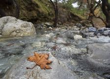Bergiger schneller Fluss mit klarem Wasser im Wald in den Bergen Dirfys auf der Insel von Evia, Griechenland stockfotografie