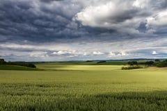 Bergigt brett landskap med gröna kornfält Arkivbild