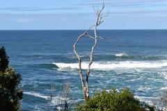 Bergigt landskap med den härliga stranden och ett knotigt träd framme på den Tsitsikamma nationalparken i Sydafrika royaltyfri bild