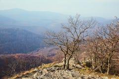 Bergigt landskap med höstträd arkivbild