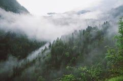 Bergkloof in de mist Stock Afbeeldingen