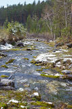 Bergkreek in de de lentesneeuw De Arshan-toevlucht Stock Foto