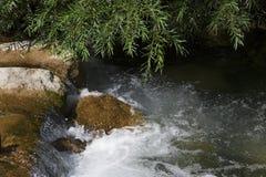 Bergkreek met cascade, groene wilgentakken Stock Fotografie