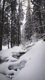 Bergkreek in sneeuwbos bij de winter stock foto