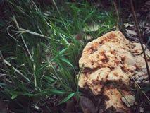 Bergkristallen in een gras Royalty-vrije Stock Afbeeldingen