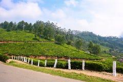 Bergkronkelweg op theeaanplantingen Stock Afbeeldingen