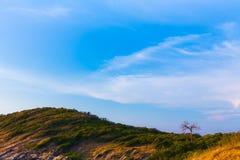 Bergkulle som buktas med det lilla torra trädet Fotografering för Bildbyråer